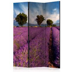 Room Divider Lavender field in Proven