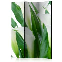 Room Divider bunch of flowers calla