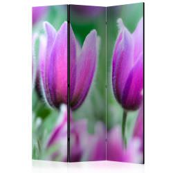 Room Divider Purple spring tulips [Ro