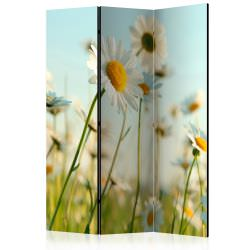 Room Divider Daisies spring meadow