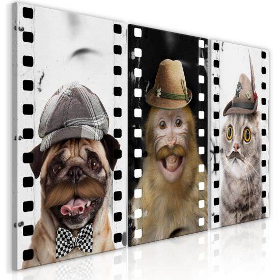 Canvas Print Funny Pets Collection
