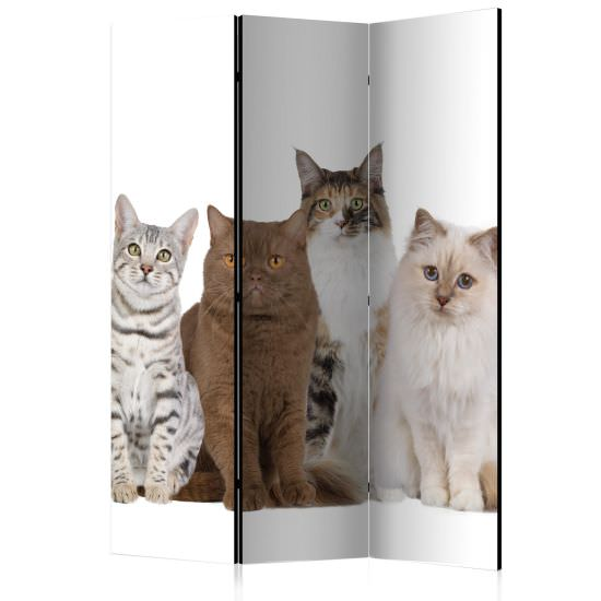 Paravento Sweet Cats Room Dividers