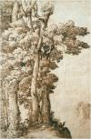 DIY transferable fresco supplied on a transferable support with direct transfer of color to the surface to be decorated. Classical subject -Tree study - by Annibale Carracci