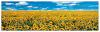 Quadro Decorativo A Sunflower Field In P